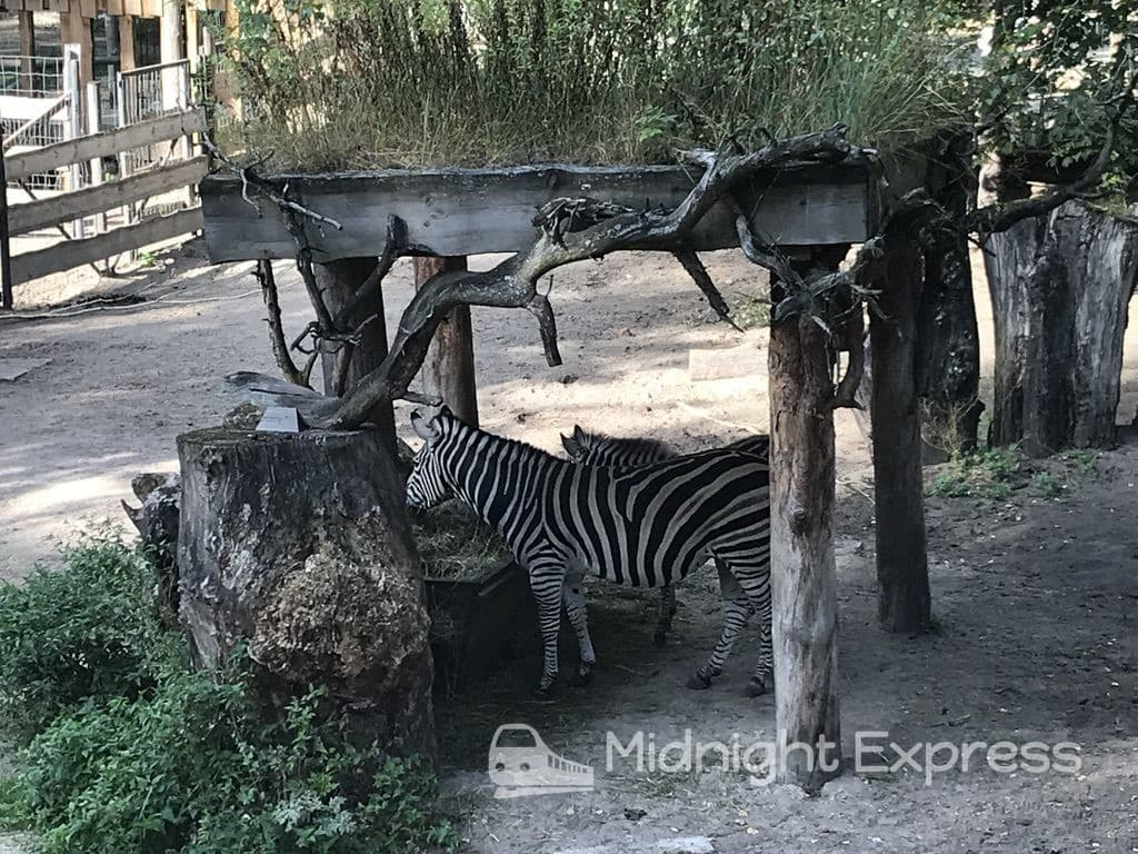 ラトビア 国立動物園