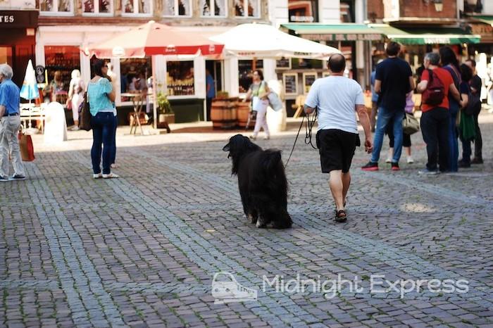 フランダースの犬 舞台